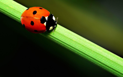Close Up Wallpapers Of A Cute Ladybird Beetle