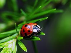 Ladybug Clip Art Clip Art on Clipart Library