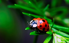 Ladybird Wallpapers Adorable 38 Ladybird Image 100 Quality HD