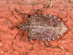 Maryland Biodiversity Project