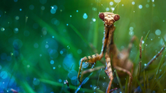 Praying Mantis HD Wallpapers