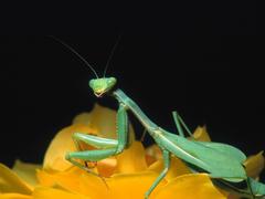 Mantis Planet Animal HD Wallpapers