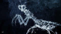 The figure of a praying mantis from the water wallpapers and image