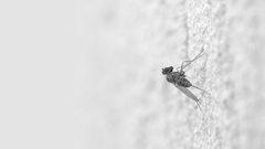 Wallpapers 1920x1080 Mosquito Insect Surface Creep
