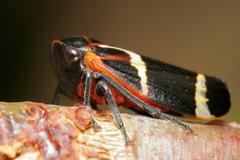 Leafhopper HD Wallpapers