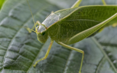 Leafhopper HD Wallpapers Image Backgrounds