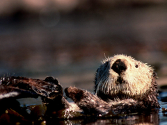 Backgrounds Collections beaver wallpapers