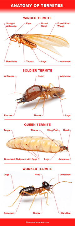 Different Types of Termites Eating Houses All Over the World