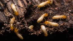 of NJ Homeowners Will Have Termites this Year