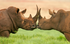 Project Rhino HD desktop wallpapers Widescreen High Definition