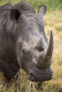 Rhino Pictures HD