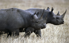 Fantastic HD Rhinoceros Wallpapers