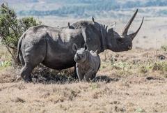 Black Rhino Pictures