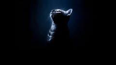 Cats Silhouettes Cats Black Animals Bengal Cat Photo Gallery for