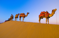 Wallpapers desert camels caravan image for desktop