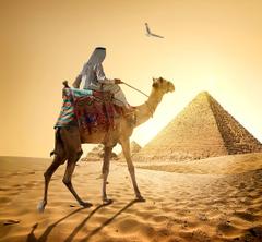 Desktop Wallpapers Camels Egypt Man Cairo Nature Desert Sand