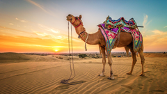 Desktop Wallpapers Camels Desert Sand sunrise and sunset