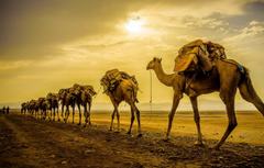 Wallpapers sunset camels caravan image for desktop