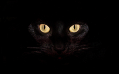 Adorable Black Cat Wallpapers Black Cat Wallpapers