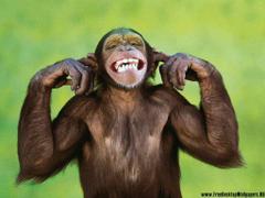 Chimpanzee Wallpapers 22