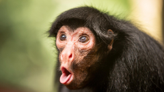 Wallpapers Chimpanzee monkey cute animals funny Animals