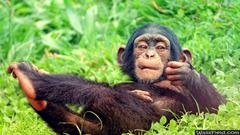 Cool Baby Monkey