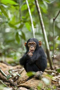 best Jane Goodall image