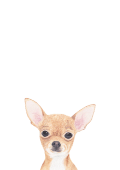 Chihuahua Illustration by Louise Jewell