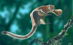 World s Oldest Flying Squirrel Fossil Discovered