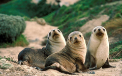 Seal HD Wallpapers