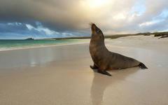 Best 48 Seal Beach Wallpapers on HipWallpapers