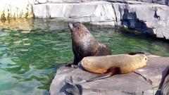Sea lions on rock