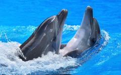 Dolphin Wallpapers