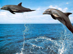 D Jumping Dolphin Wallpapers