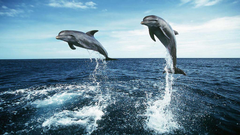 Dolphin Jumping HD Wallpapers
