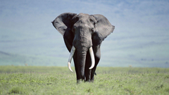 Fonds d Elephant tous les wallpapers Elephant