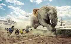 Dogs racing an elephant Wallpapers
