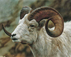 Remarkable Hd Goat Wallpapers