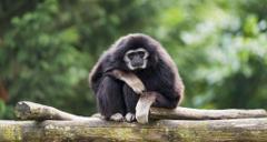 Full size monkey