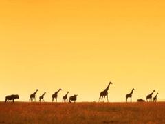 FunMozar Giraffe Wallpapers