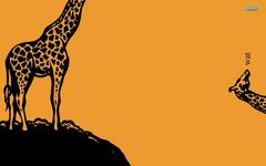 Wat Giraffe wallpapers