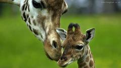 FunMozar Baby Giraffe