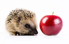 Hedgehogs Red Apples Animals White backgrounds
