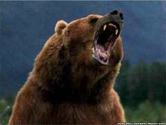 Wallpapers For Grizzly Bear Roar Wallpapers