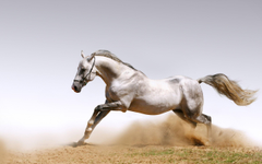 A selection of 10 Image of Horses in HD quality