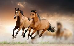 Running Horse HD Wallpapers