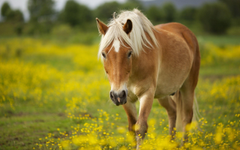 Horse Wallpapers Android Phones Wallpapers