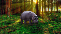 Hippo Wallpapers 14