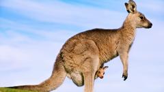Tree Kangaroo HD Wallpaper Backgrounds Wallpapers
