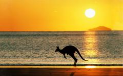 Kangaroo kangaroos beach Australia Sun HD wallpapers